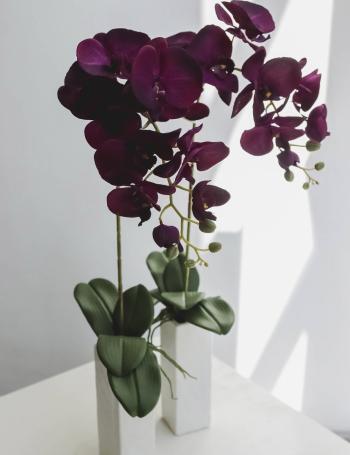 Композиция интерьерная с орхидеей PURPLE DOUBLE